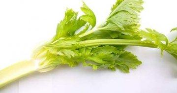 Selleriekraut - auch gut zum Trocknen geeignet